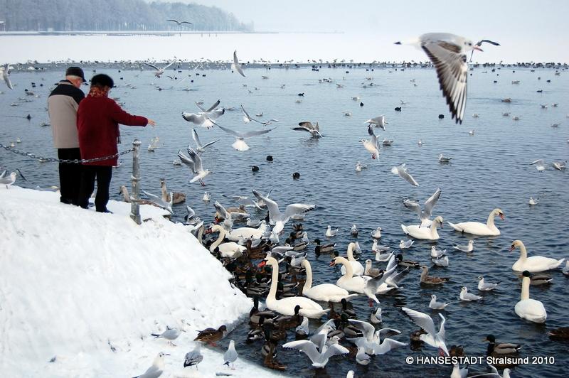 Vogel Futtern Im Winter Ja Oder Nein